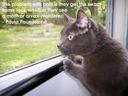 quotes cat the problem will cats is they get the exact.