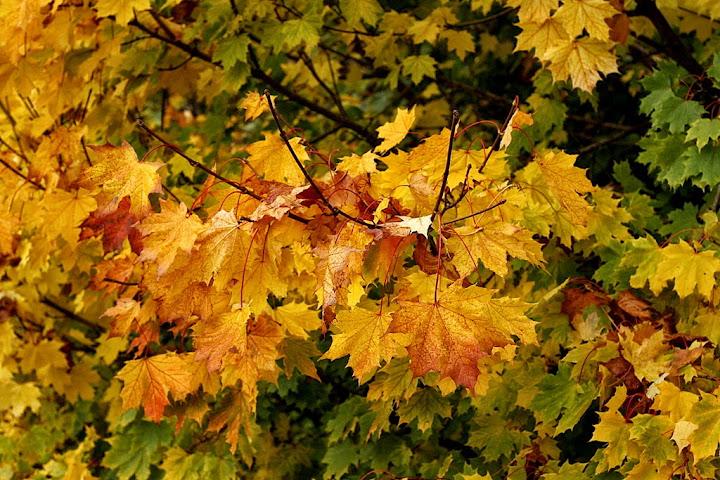 jesień, jesień w Edynburgu, autumn, fall,