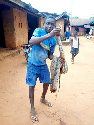 Photos: 13-year- old boy kills huge python in Anambra