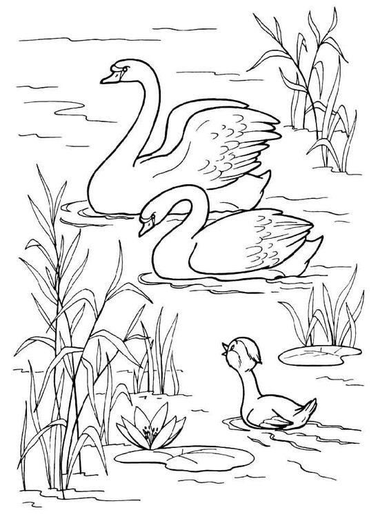 Tranh tô màu con thiên nga trong hồ