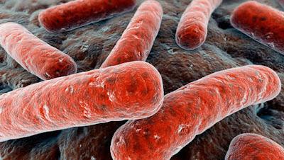 Obat Tuberkulosis