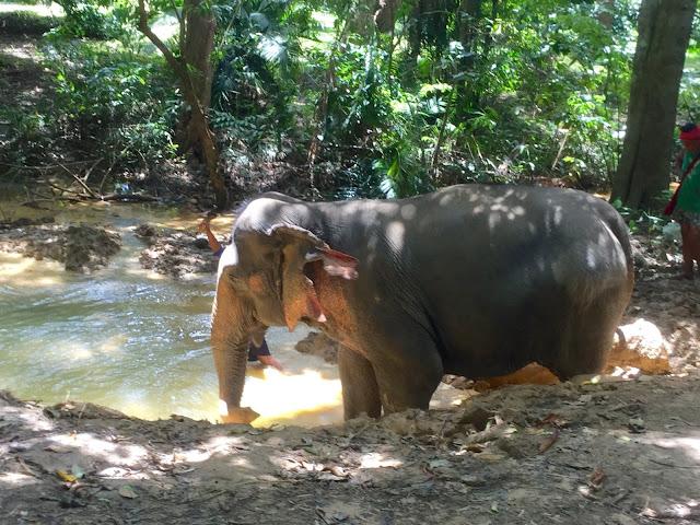 Elephant sanctuary experience, Khao Sok National Park, Thailand