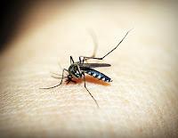 Mosquito One - Biting Mosquito