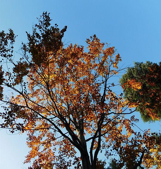 Barwy jesieni w koronie drzew.