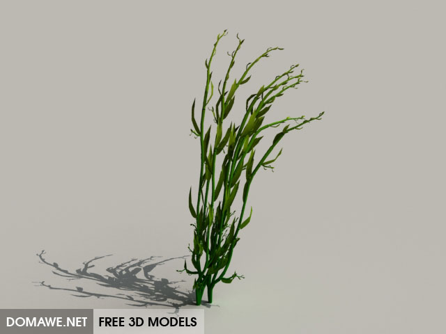 DOMAWE net: Grass 3D Model Free Download - 12