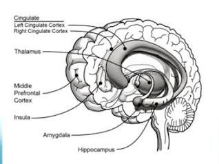 bagian sirkuit empati otak