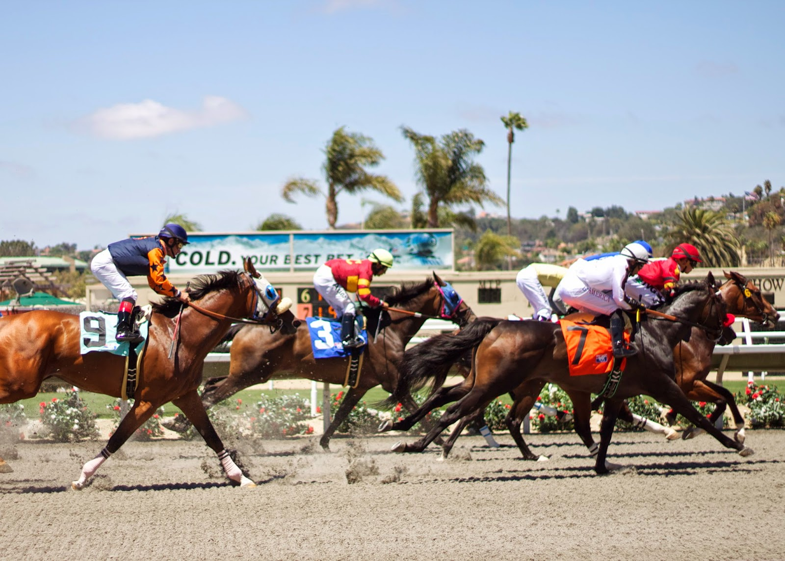 delmarracing horses, horse races in del mar, horse racing del mar 2014