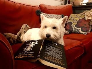 Fehér westie kutya piros kanapén a Cirrus a Tűzfalon – Egy rendbontó vírus kalandjai című ifjúsági regénnyel (Könyvmolyképző kiadó, 2017)