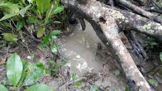 HUtan Mangrove Pantai Berangas