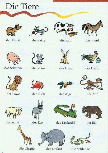 Akkusativ Bahasa Jerman Belajar Bahasa Jerman Kursus Bahasa Jerman Privat Belajar Bahasa Jerman Nama Nama Binatang Dalam Bahasa Jerman