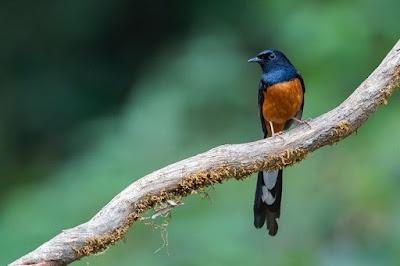 Kisaran Harga Obat Burung Produk Hore Saat Ini Terbaru Dan Manpaat Pemberiannya