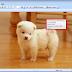 Cara Merubah Size atau Dimensi Gambar Menggunakan Microsoft Office Picture Manager