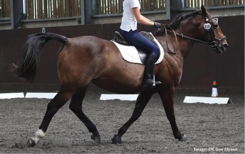 ridden horse ethogram