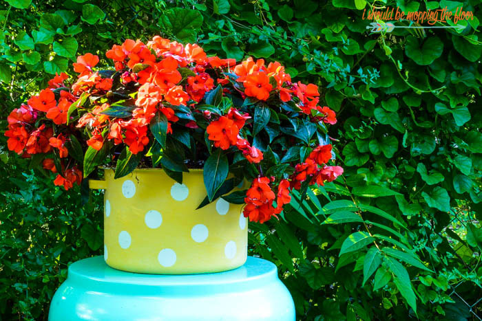 DIY Polka Dot Planter