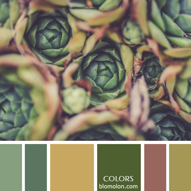 variedad_en_color_paletas_colores_10