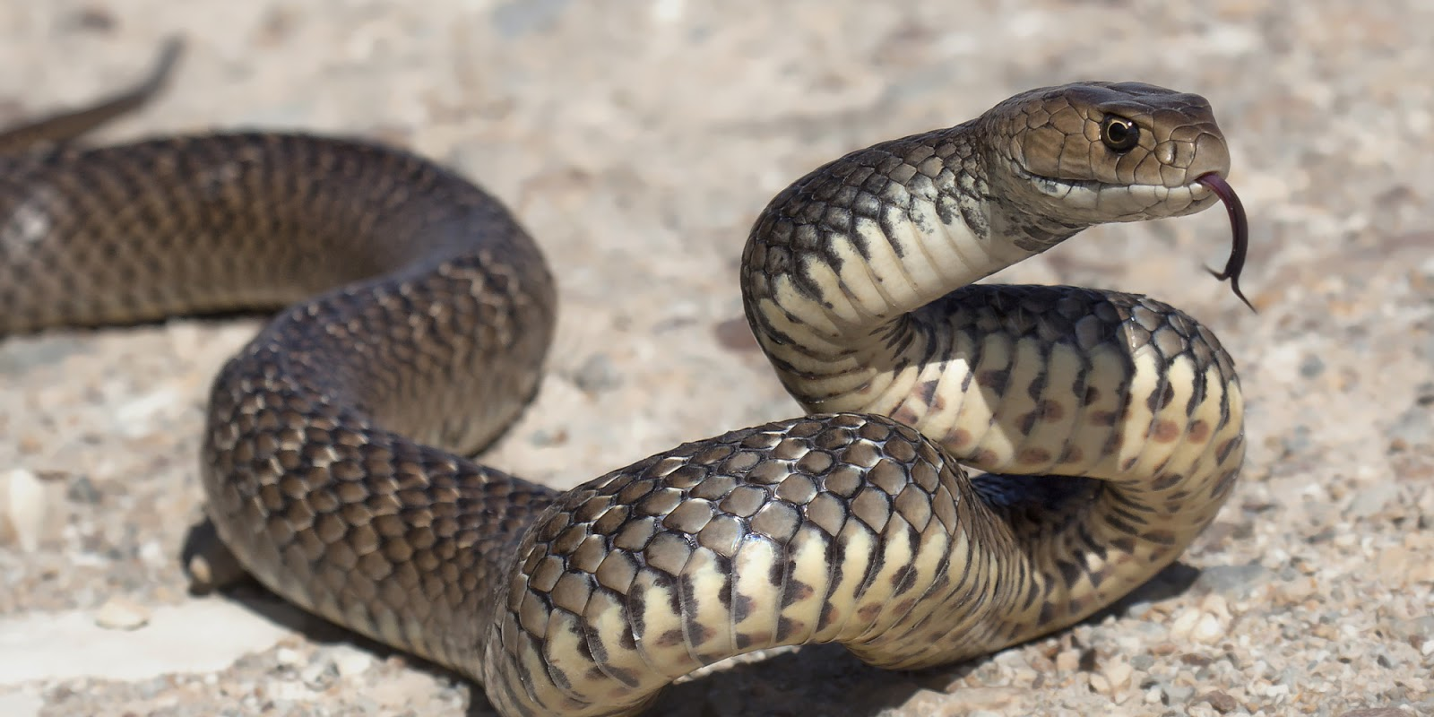 Uyku uyarı, ya da neden bir yılan ısırıkları hakkında bir rüya mı