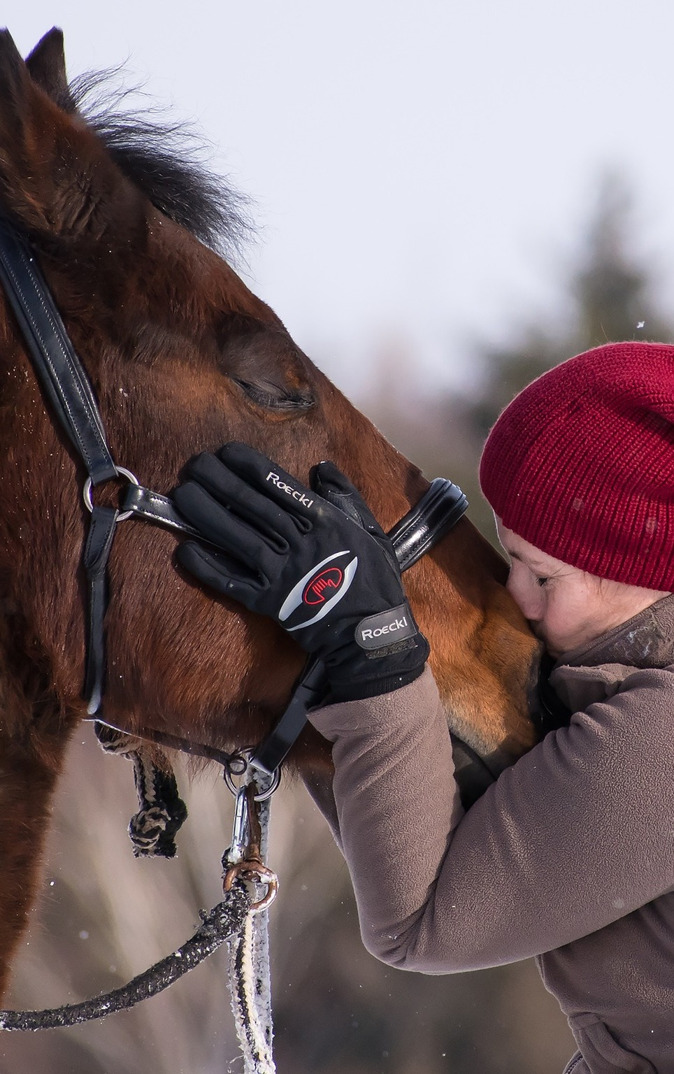Animal human communication.