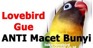 Mengatasi Lovebird Tidak Mau Ngekek di Gantangan dan Dirumah atau Tidak Jalan