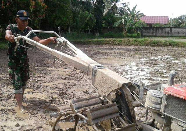 Menggunakan Traktor, Babinsa dan PPL Mengolah Lahan di Kelurahan Damai, Binjai