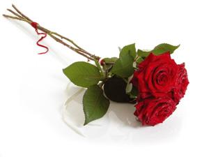 Wiersze Lekkim Piórem Pisane Róża Czerwona