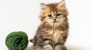 تفسير رؤية القطط في المنام بالتفصيل
