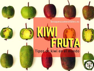 El Kiwi es una fruta tropical de la ( Zona 7), originaria del sur de China