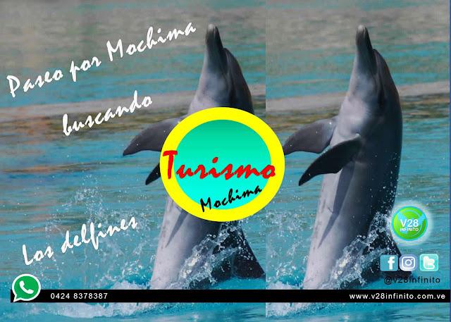 imagen mochima delfines