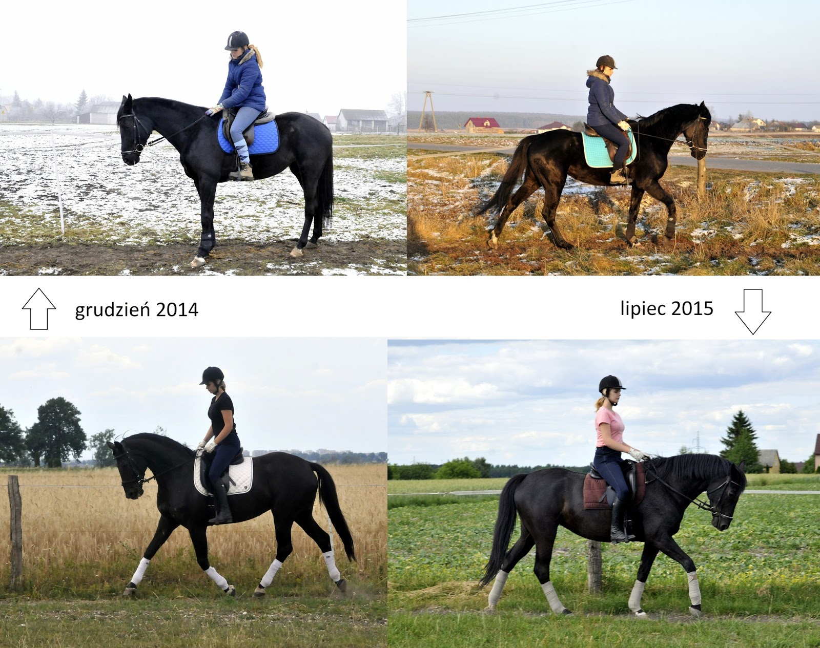 Hubala Equestrian Jak Przytyć Konia
