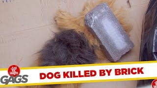 Funny Video – Dog Killed by a Brick – Just For Laughs Gags