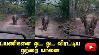 An Elephant Chased Tourist Jeep At UttaraKhand