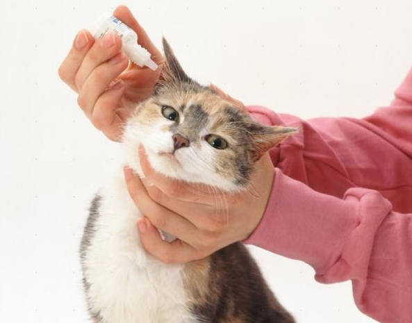 Here Home Ear Mite Medicine For Cats