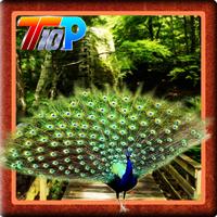 Top10newgames Release The Peacock