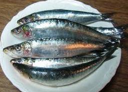 sarden ikan untuk ibu hamil