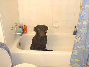 Baby It39s Hot Outside Or How To Help Your Dog Avoid