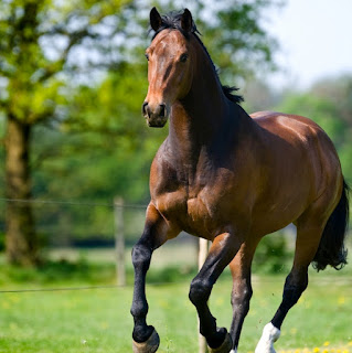 fun facts about horse for all animal lovers