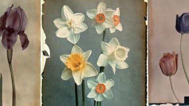 Las flores de Leendert Blok y Gilles Clément: Silent Beauties