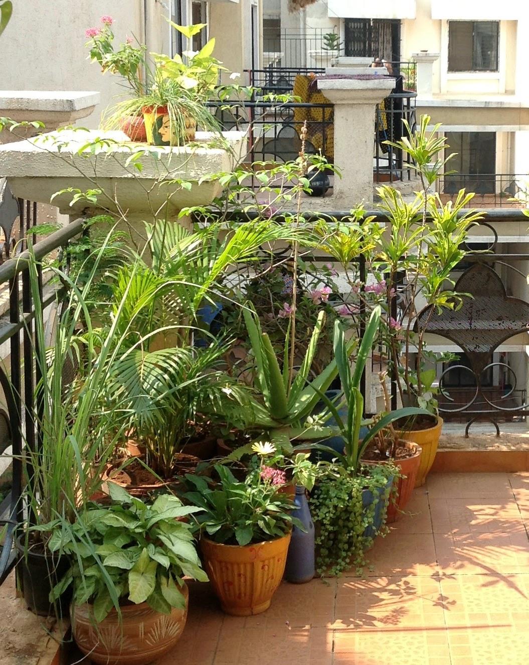 Apartment Balcony Indian Balcony Garden Decoration Ideas Home Designs Inspiration