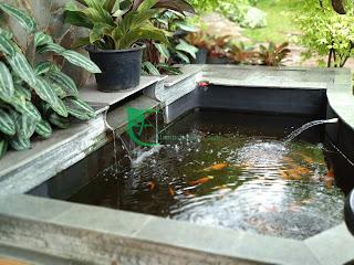 Kami menawarkan jasa pembuatan dan renovasi kolam koi, kolam minimalis dan kolam relief.
