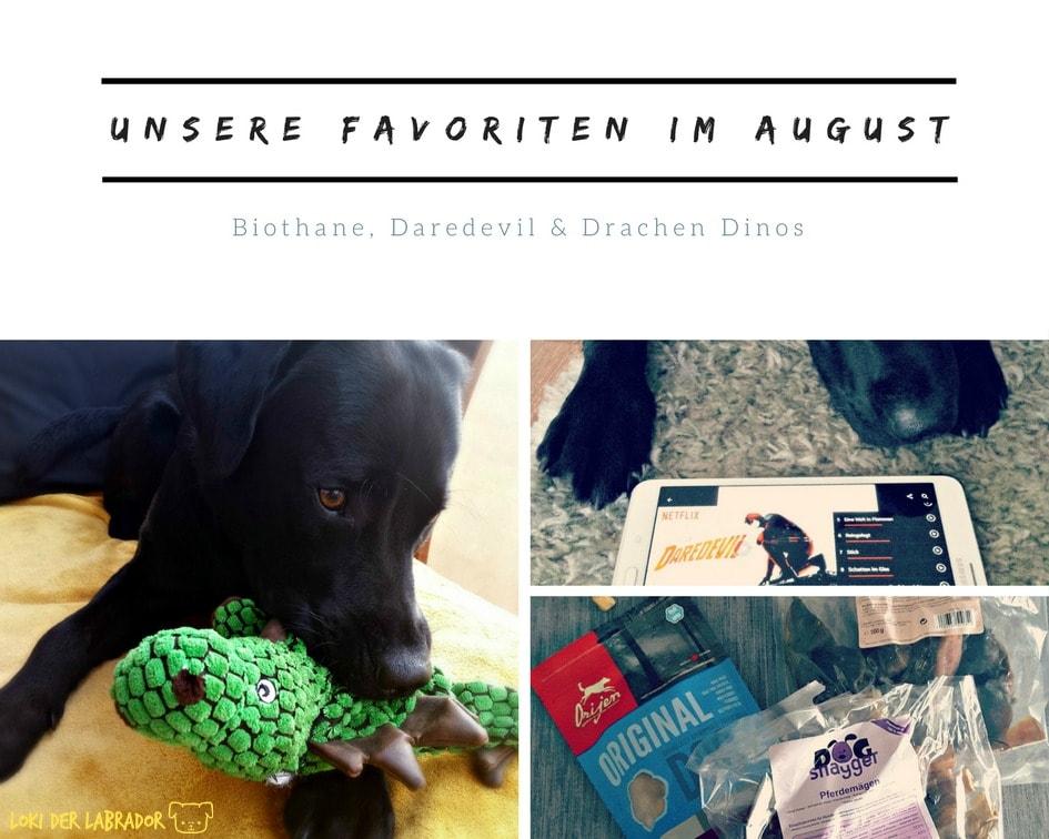 Fotocollage Monatsfavoriten schwarzer Labrador Loki