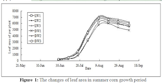 The Growth Characteristic of Summer Maize in the Wide Ditch Irrigation Mode