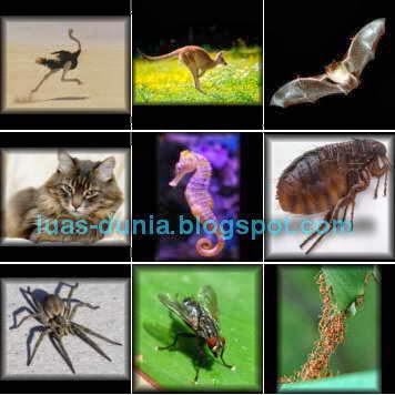 fakta unik semua tentang binatang
