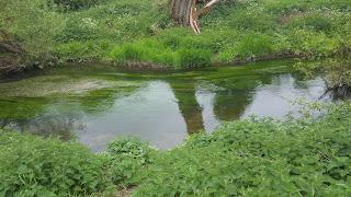 The River Ouzel at Ouzel Valley Park, Milton Keynes