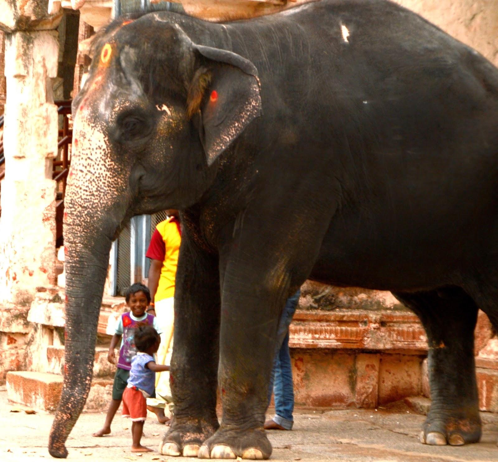 Imagen de niño junto a elefante en Hampi