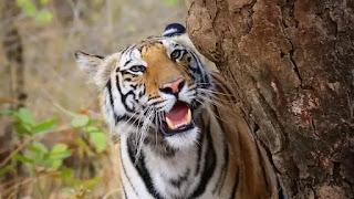 Sundari Satkosia Tiger Reserve