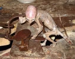 Wading Through Treacle: Genetically Engineered People