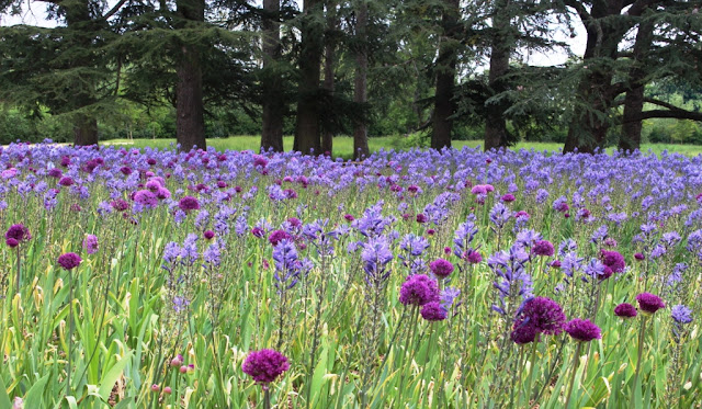Fab sultry alliums and camassia combo