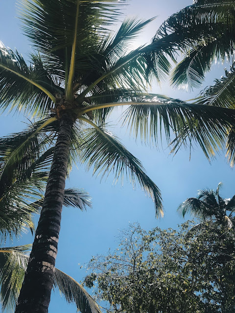 Palm Trees in La Romana, Dominican Republic