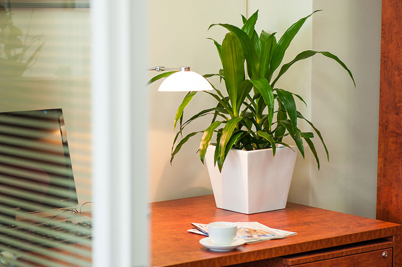 Best Indoor Plants For Office Best Office Plants 7Best Indoor