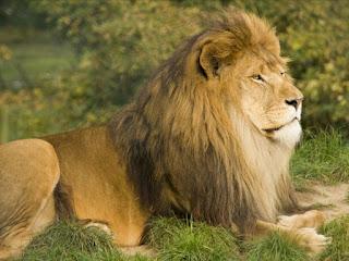 Singa Afrika yang tunduk pada Habib Umar bin Hafidz