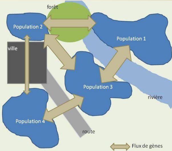 Définition de la Métapopulation en Ecologie